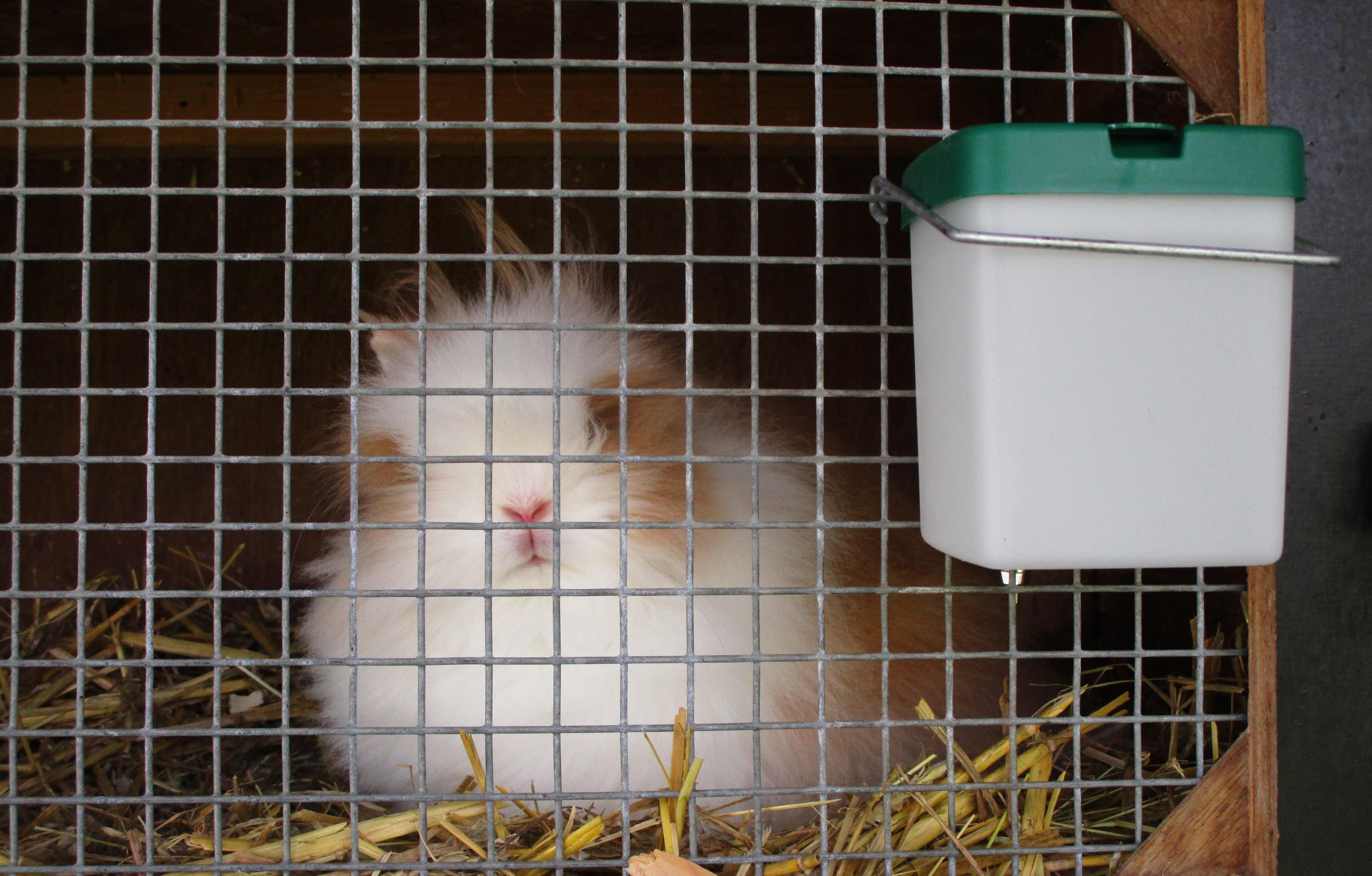 drinkfles konijn bij teddybunnies