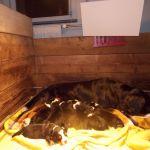 infraroodpaneel voor dieren
