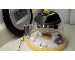 Broedmachine brinsea mini advanced ex met kuiken