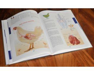Boek van Hans Ringnalda over kippenziekten