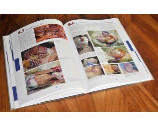 Uitgebreide beschrijving van meest voorkomende kippenziekten